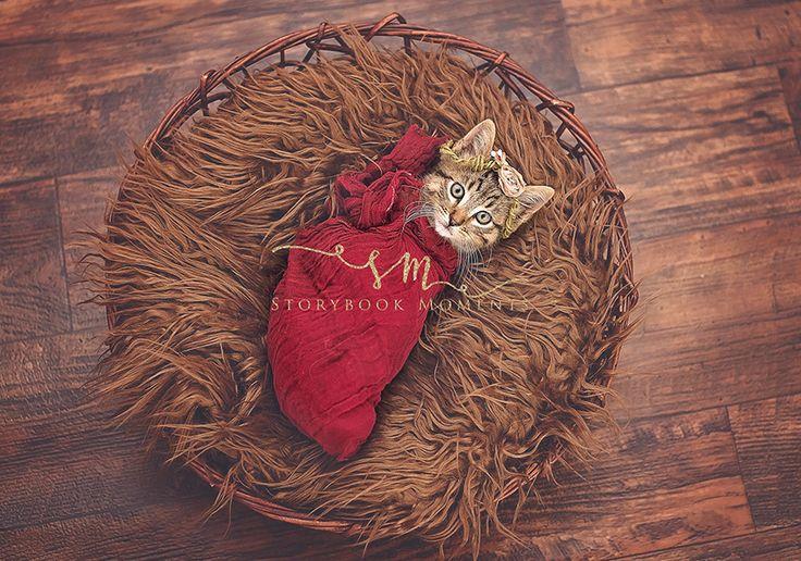 Inspirée par des photos de naissance, elle photographie le chaton qu'elle a…