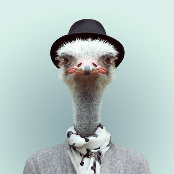 What is it like when animals put on human dresses? Zoo Portraits is an creative project by Spanish photographer Yago Partal who did the experiment and captured the funny pictures of animals with sweater, shirt, etc.