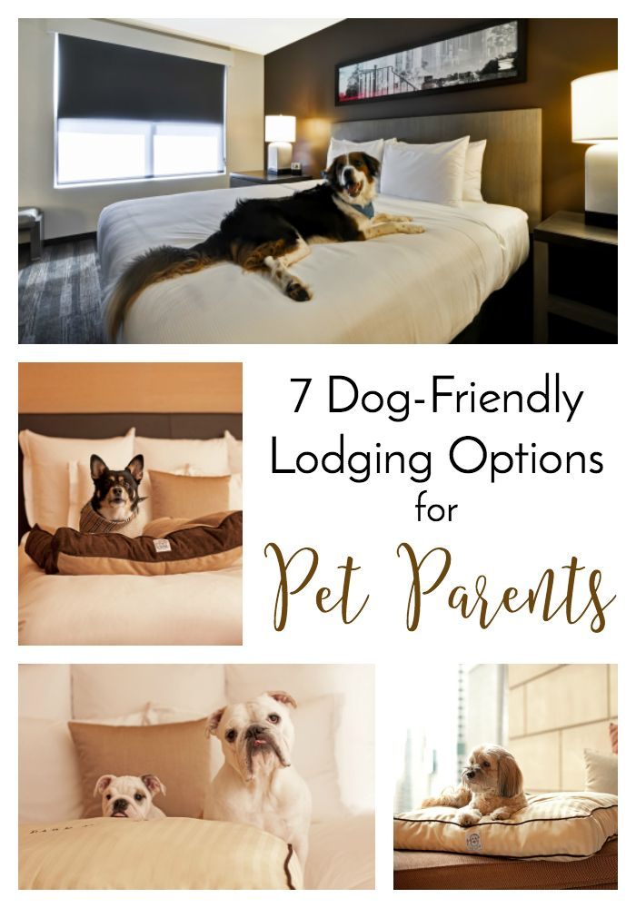 7 Dog-Friendly Lodging Options for Pet Parents | http://www.thelazypitbull.com/dog-friendly-lodging-2/