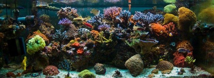 die beste aquarium gestaltung fur meeresfische mit korallen steinen und sand