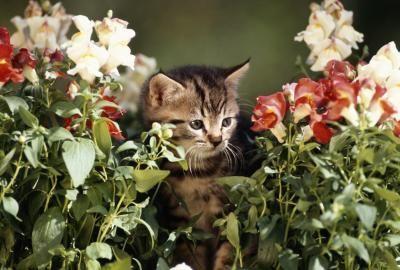 tipps wie sie katzen vertreiben garten