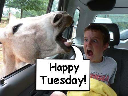 happy tuesday funny meme - photo #7
