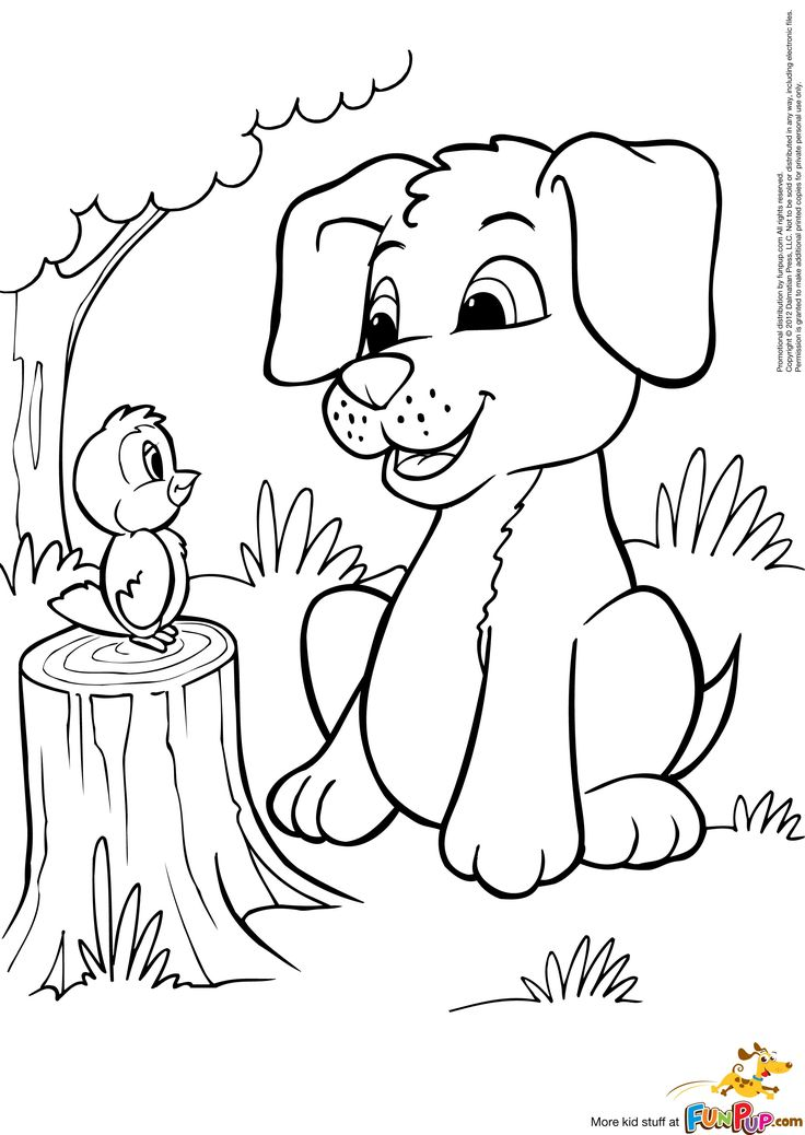 Photo Puppies Colouring Pages Images Bird Coloring