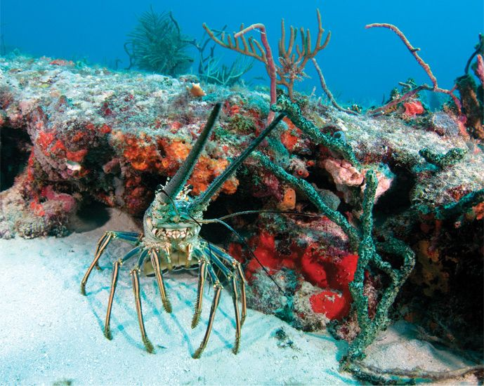 40 best images about florida coral reefs on pinterest for Why live in florida