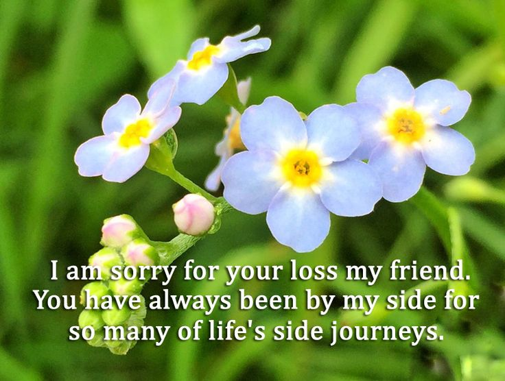 condolences messages for loss