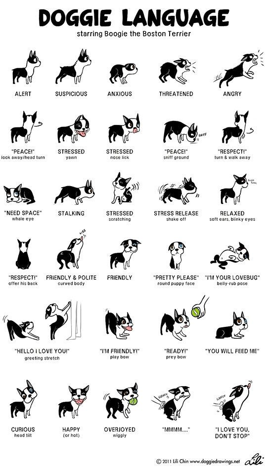 The Language Of A Dog   themetapicture.com
