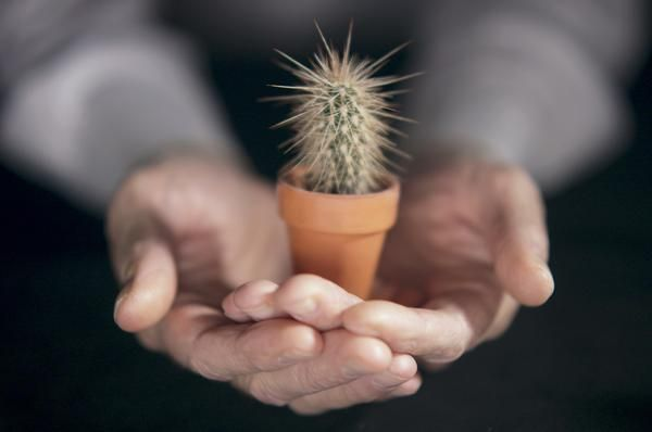 The Types of Small Indoor Cactus (Includes holiday cacti)