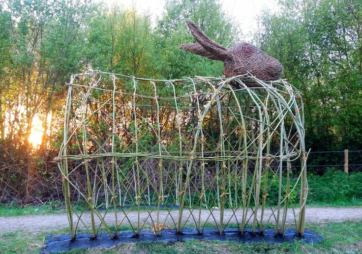 Living willow tunnel with woven willow hare head at Little  Wooldem Miss. Irlam .Salford. Nature Reserve. Destroyed after two weeks. PLEASE no find hare head