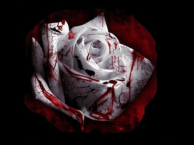 rose of sorrow | Blood Red Rose - Jackie | Sad Picture | Lover of Sadness