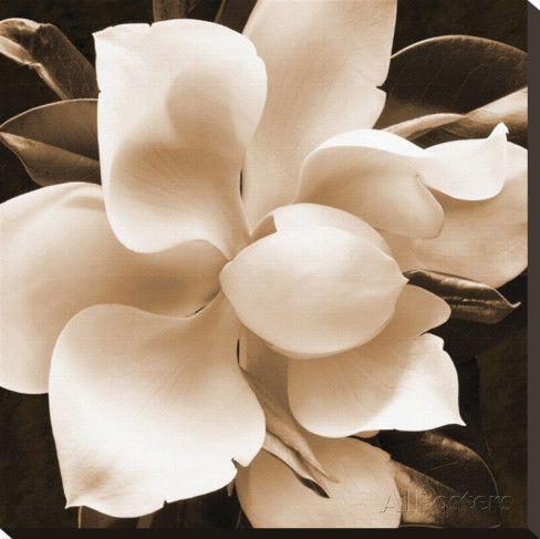 Magnolia Close Up II Impressão em tela esticada por Christine Zalewski na AllPosters.com.br