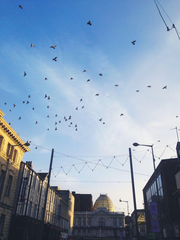 Birds#blackpool#england