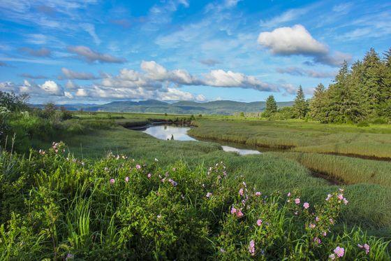 Share the Experience | Willapa National Wildlife Refuge