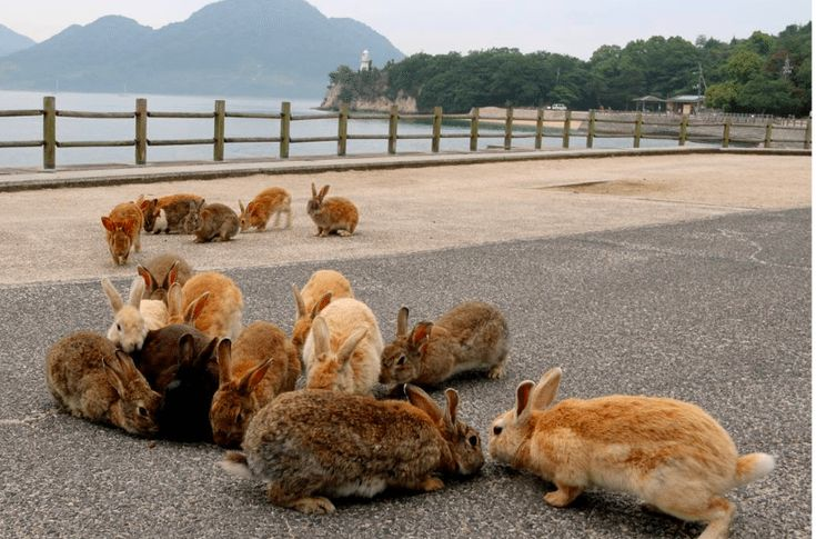 There's An Island In The Pacific Ocean That Is Literally Crawling With Bunnies