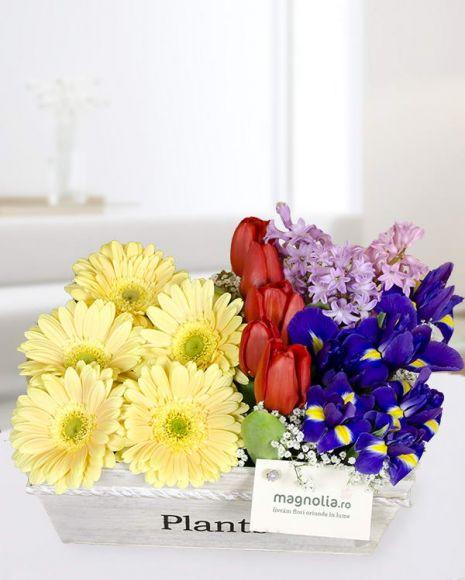 Aranjament de primavara cu irisi, lalele, zambile si gerbera.  Spring ararangement with irises, tulips, hyacints and gerbera