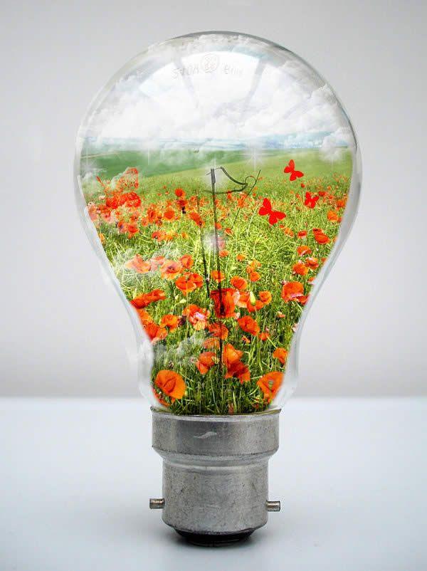 light flowers