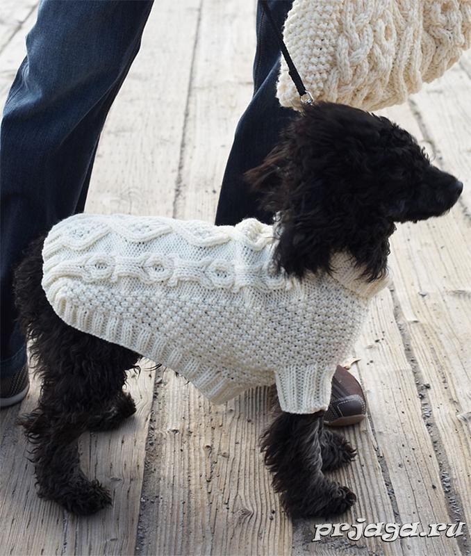 Вязание кофточки для собак