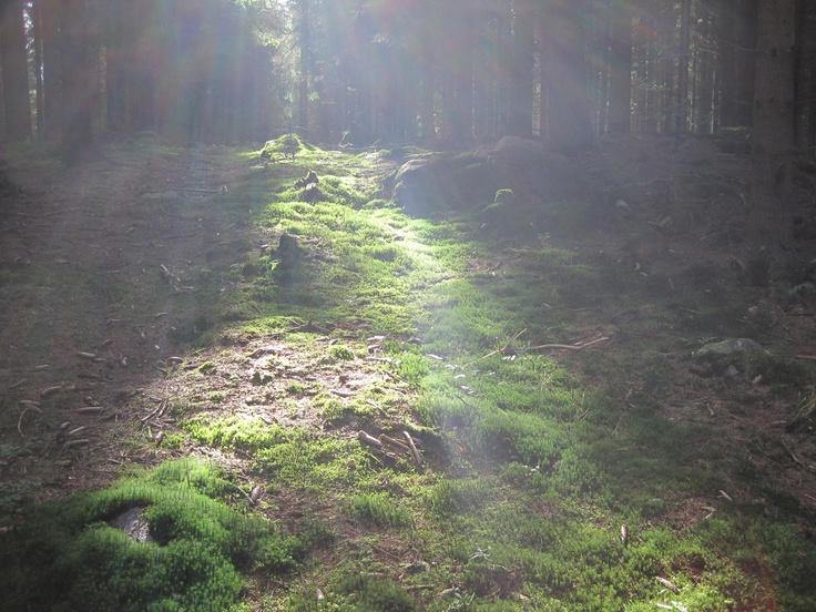 skog, höst, tjörnarp