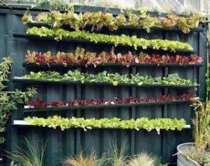 A gutter garden on a fence. Screens keep soil-less mix in and each gutter drains to one below.