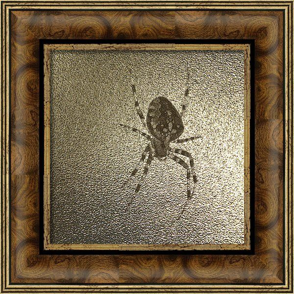 Araneus Diadematus Framed Print featuring the photograph Golden Cross Spider by…