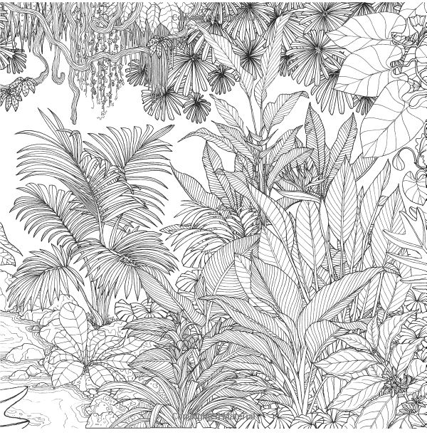Amazon Rainforest Escape My Island Animal Exotic Flower And Tropical Plant Coloring BooksAdult