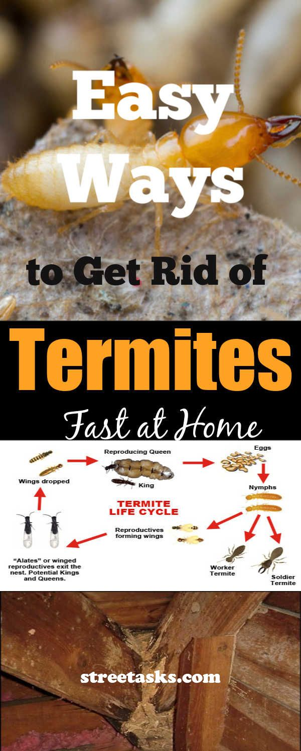 How To Get Rid Of Termites Permanently How To Get Rid Of Termites For Good Using Borax Youtube Termite Treatment Termites Termite Control