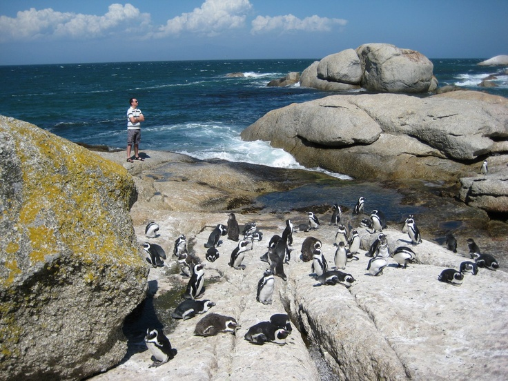 Boulders Beach, Simons Town, with all the penguins