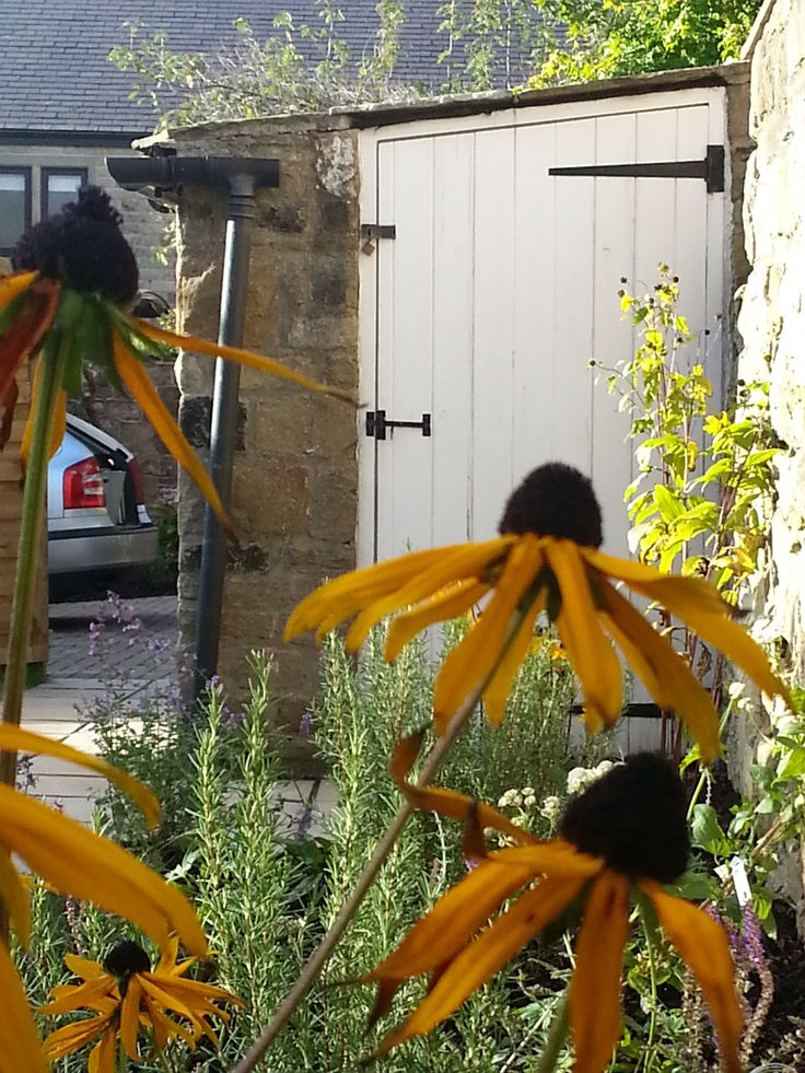 High summer flowers give a relaxed air to the potting shed! Thorner rear garden.  NLGD