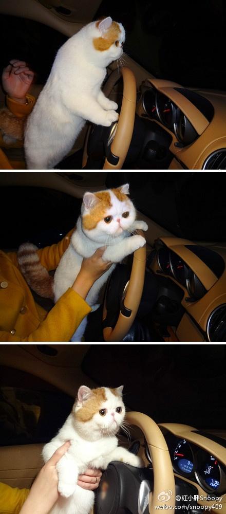 cute cute cuteSnoopy Cat, Cat That Drive, Cat Kill, Big Cats, Cat Fans, Pets Photos, Random Pin, Animals 3, Disney Character