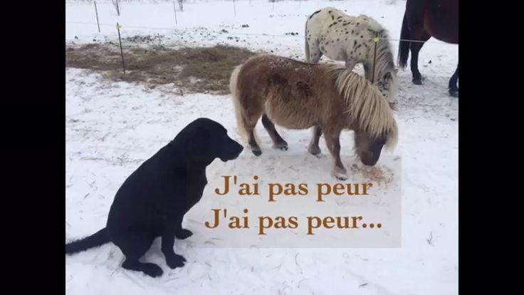 Good friend - Némo, JP et les chevaux