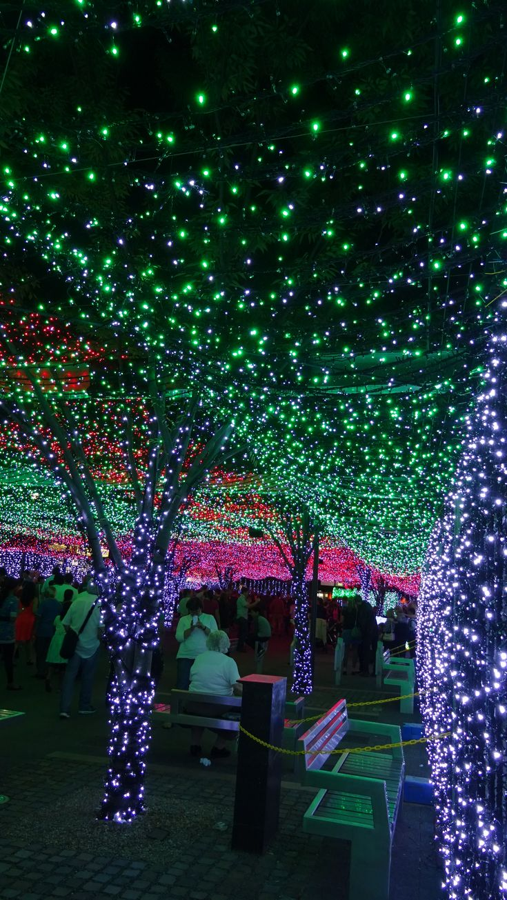 Christmas in Canberra, Australia.- places I've been. Wish I saw this at Christmas time!