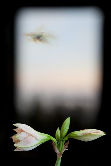 "Evergreen Window ~ 2012 ~ 22"" x 33"""