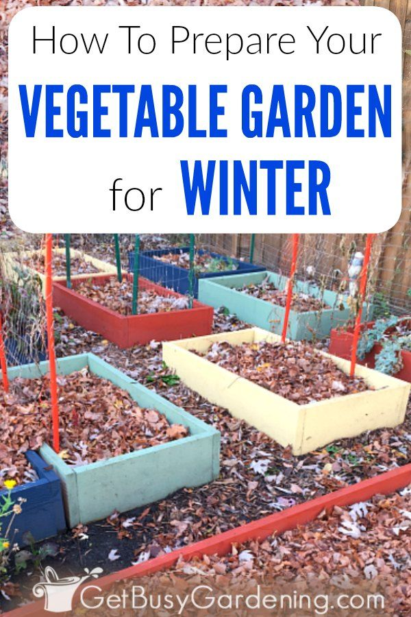 So bereiten Sie Ihren Gemüsegarten auf den Winter vor