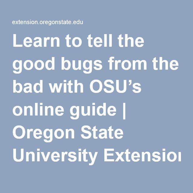 Learn to tell the good bugs from the bad with OSU's online guide | Oregon State University Extension Service | Gardening