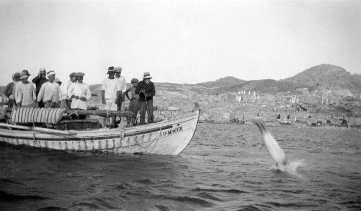 Κατάδυση από σπογγαλιευτικό σκάφος. Δήλος, γύρω στα 1935 Έλλη Παπαδημητρίου - Μουσείο Μπενάκη