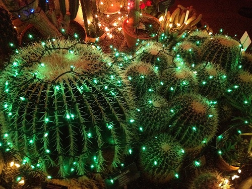 909 Best Cactus Images On Pinterest Plants Gardening And Gardens