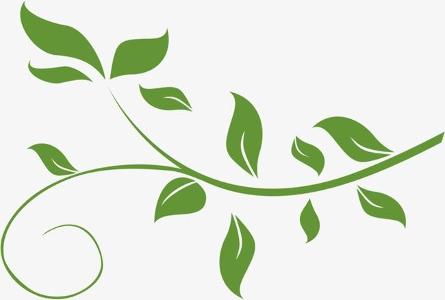 fresh green leafy vine leaves, vine clipart, fresh, green vine png  transparent clipart image and psd file for free download | leaf clipart,  plant clips, clip art  pinterest