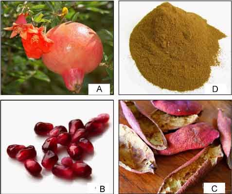 pomegranate-peel-powder-health-benefits,-uses-and-how-to