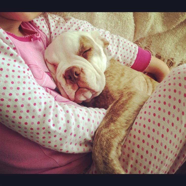 Victorian bulldog <3 snuggle time