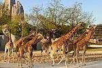 PHOTOS. Découvrez le nouveau zoo de Vincennes