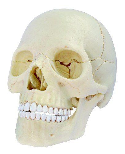 Mejores 23 imágenes de ANATOMIA HUMANA en Pinterest | Anatomía ...