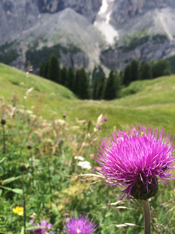 fiori di montagna 3