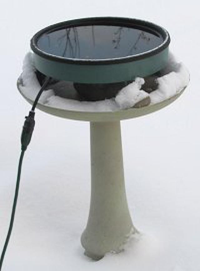 Heated Bird Bath Tips: A heated bird bath provides birds with water all winter long.