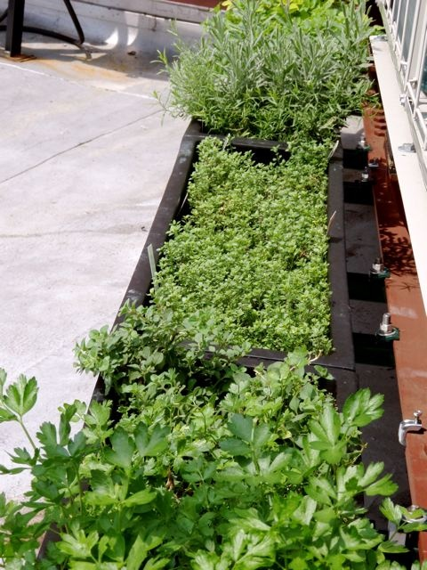 Talk About An Extensive Herb Garden. Located On Top Of North Square  Restaurant In The Washington Square Hotel, Jakeu0027s Edible Garden Is An Herb  Garden.