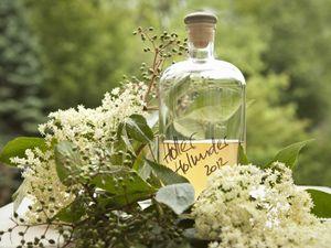 Wenn der Holunder in seiner Blüte steht ist eines sehr beliebt: Holunderblütensirup selber machen | eatsmarter.de