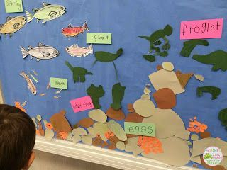 Salmon and frog life cycle board.