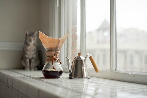 Coffee.Coffe Time, Coffe Cat, Teas Time, Coffe Lovers, Mornings Coffee, Coffe Pour, Coffee Time, Kitty, Healthy Coffee