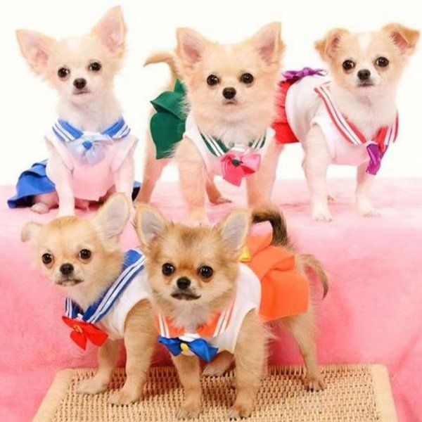 Sailor Moon Dog Costumes Sailor Moon Costume Pet Costumes Dog