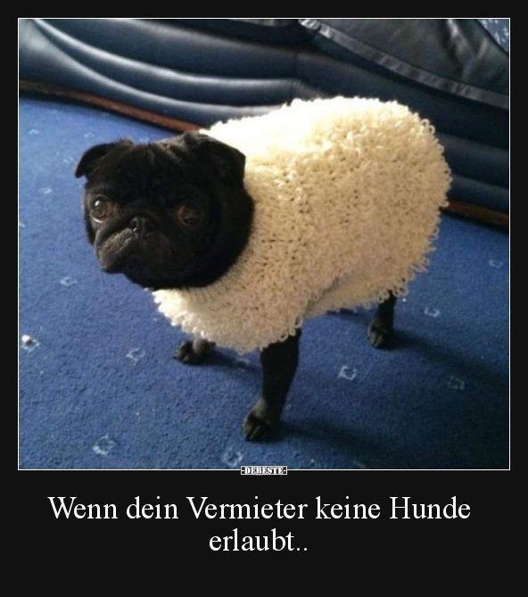 Wenn Dein Vermieter Keine Hunde Erlaubt Wenn Dein Vermieter Keine Hunde Erlaubt Lustige Bilder Spruche In 2020 Pugs Funny Meme Funny Dogs Funny Dog Shirts