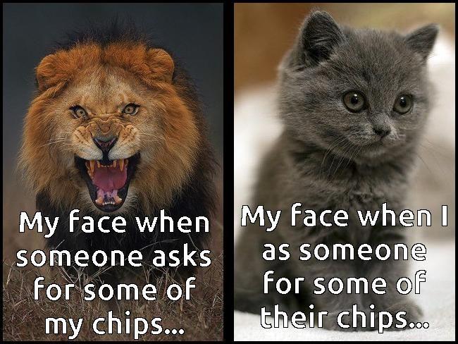 Lion meme of bag of chips kitten.