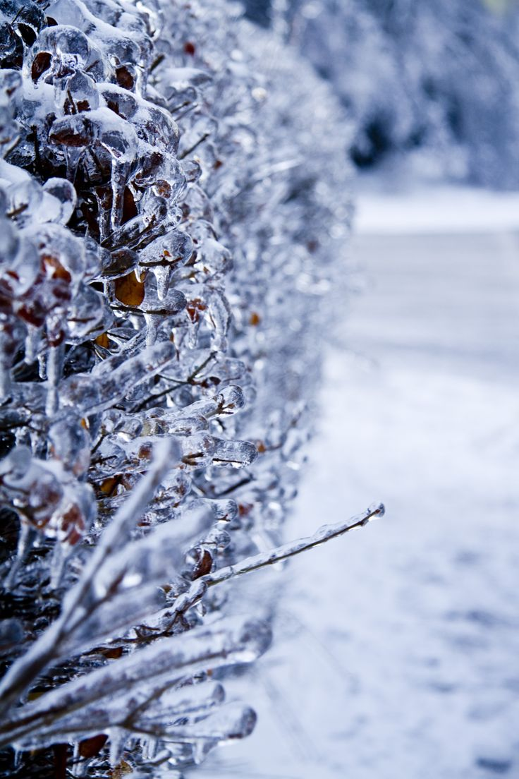 Toronto after the ice storm—12/26/13